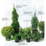 ガーデンプラン3